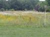 meadow, summer, 2011